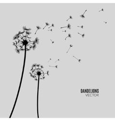 Dandelion silhouette flying dandelion buds vector