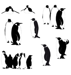 penguin silhouettes on the white vector image