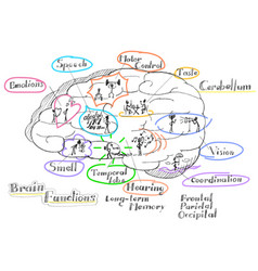 brain functions vector image vector image