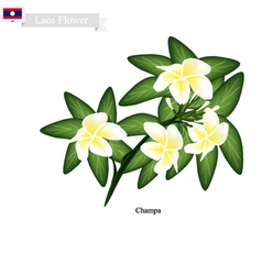 National Flower of Lao Champa or Plumeria vector image vector image