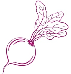 Beet with leaves pictogram vector