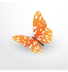 Butterfly web flat icon vector