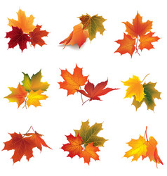 autumn icon set fall leaves and berries nature vector image vector image