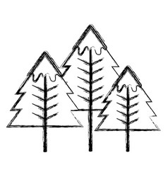 figure beauty natural pine tree design vector image