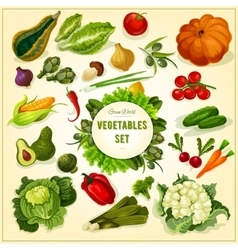 Organic fresh vegetables and herbs poster vector