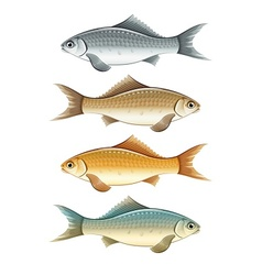 Set of live colour fish vector image vector image