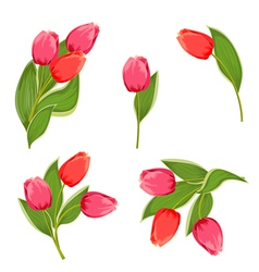 tulip3 vector image