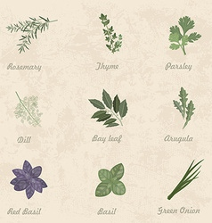 collection of herbs for you design vector image