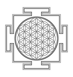 monochrome outline flower of life yantra vector image
