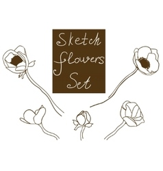 Flower set detailed hand drawn anemones vector