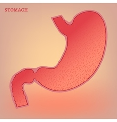 Stomach image vector