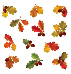 Autumn icon set fall leaves and berries nature vector