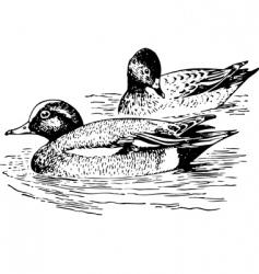 bird anaspenelope vector image vector image