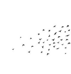 flock of flying birds vector image