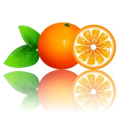 Fresh Ripe Orange vector image
