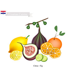 Citrus fruits and fig the famous fruit in croatia vector