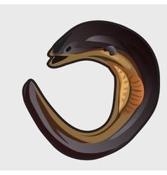 Cartoon fish european eel vector