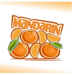 Mandarin still life vector