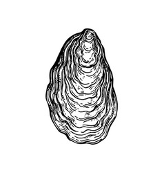 oyster shell ink sketch vector image vector image