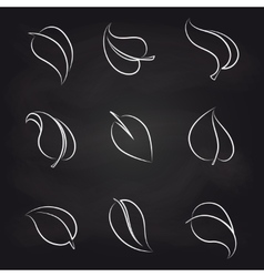 Outline leaves icons on blackboard vector image