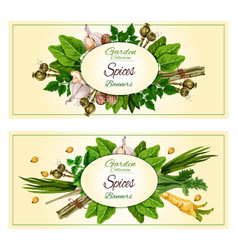 Spices and herbs banner set for food design vector