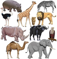 Wild animals from african continent vector