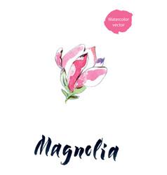 Flower of magnolia watercolor vector