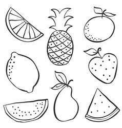 hand draw of fruit fresh doodle vector image vector image