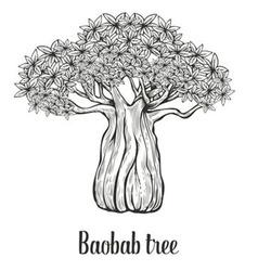 Baobab tree leaf engraving vintage hand drawn vector