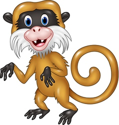 Cartoon funny tamarin monkey isolated vector image vector image