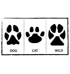Animal footprints vector image vector image