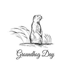 groundhog day sketched with vector image vector image