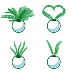 plants growing in pots vector image