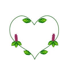 Thai basil leaves and flowers in a heart shape vector