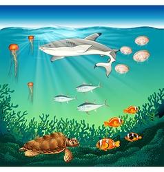 Sea animals swimming under the sea vector