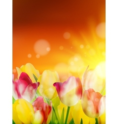 Tulip field under sunset sky eps 10 vector