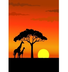 african sunset vector image