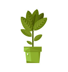 Home plant in pot isolated icon vector