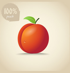 Cute orange peach vector image