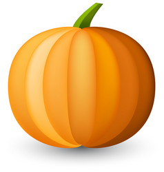 orange halloween pumpkin on white vector image