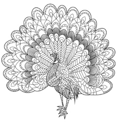 Peacock Coloring for adults vector image vector image
