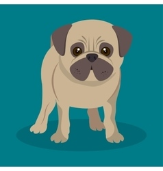 cute pug doggy standing blue background vector image