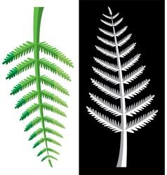 Fern leaves vector