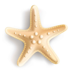 Starfish isolated on white background vector