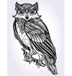 Hand drawn Owl design vintage style vector image