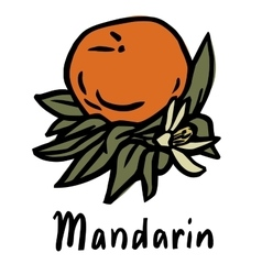 Mandarin fruit vector