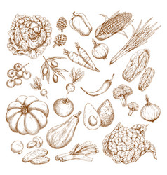sketch isolated vegetables icons vector image