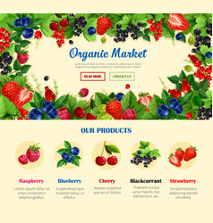 fruit and wild berry organic food banner template vector image vector image