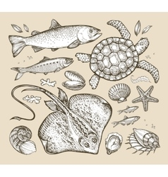 Sea animals hand-drawn sketches fish trout vector