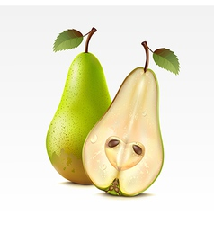 Two pears vector